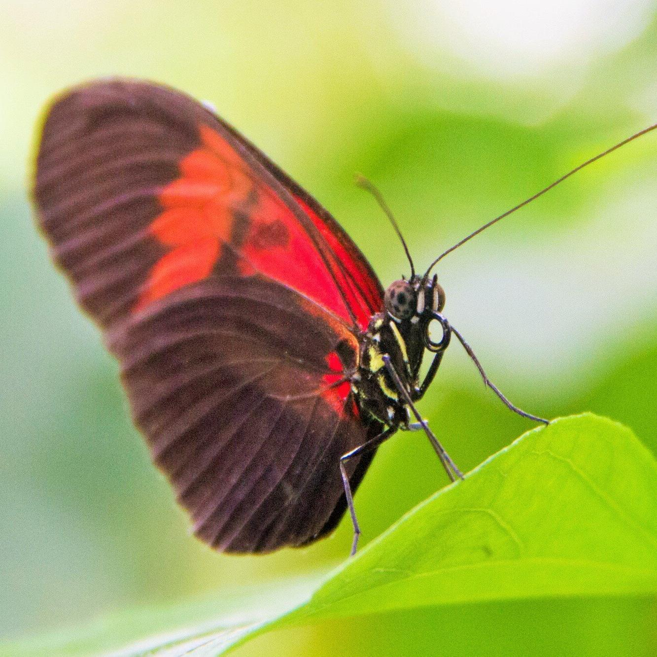 Schmetterling © Usedom Tourismus GmbH/Andreas Dumke