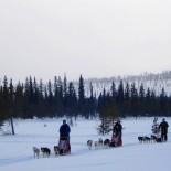 Ferienhaus Lappland - Hundeschlittenfahrt Gruppe