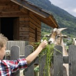 Bringt den Kids Spaß: Tiere füttern
