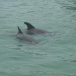 Delfinflossen