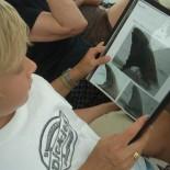 Delfine bestimmen nach Katalog