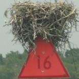 Nest auf Schild