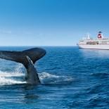 MS Deutschland - Walflosse