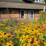 Ferienhaus Diekhof: Außenansicht mit Blumen; Bild: PR Diekhof
