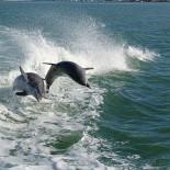 2 Delfine