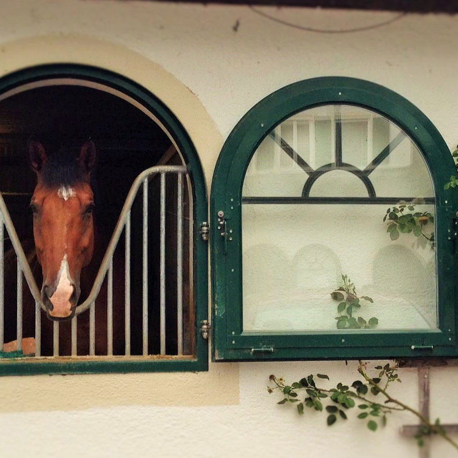 Gut_Ising_Pferd_Fenster.Bild_SMH