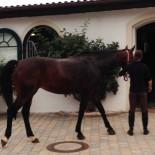 Gut Ising: Pferd im Reitstall; Bild: Sandra Mueller-Hofner