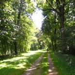 Radweg uner Bäumen an der Iller