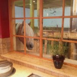 Fenster zum Pferdestall in der Seealm