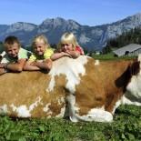 Kinder mit Kuh Fotos: Erlebnishotel Post Unken