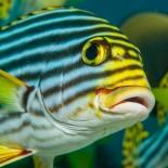 Atmosphere Resort Malediven: Fisch unter Wasser; Bild: PR
