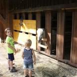 Kids beim Pferdestall  ©AndreaFischer