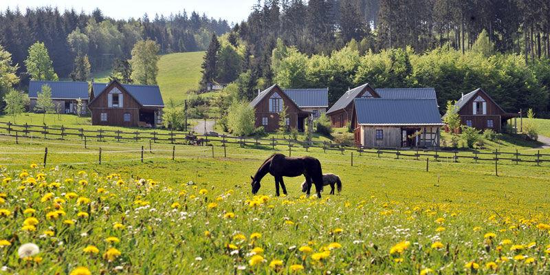 Bergdorf Liebesgruen, Pferdekoppel Bild@Liebesgruen