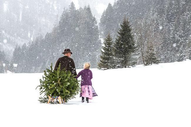 Christbaum holen im Salzburger Land