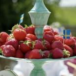Erdbeerzeit!