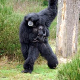 Schimpansen in der Cerza Safari Lodge & Zoo; Bild: PR