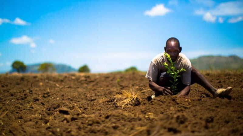 Man planting a tree copyright: bedandtree.com