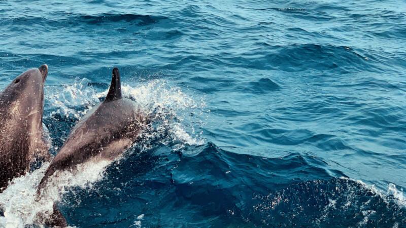 Delfine © Foto: Andrea Fische