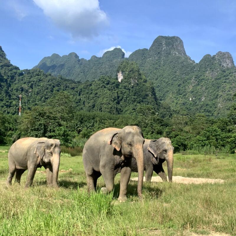 Elephant-Hills,-3-Elefanten Foto: © Andrea Fischer