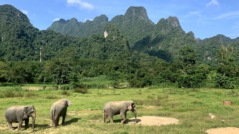 Elephant-Hills-Elefanten Foto: © Andrea Fischer