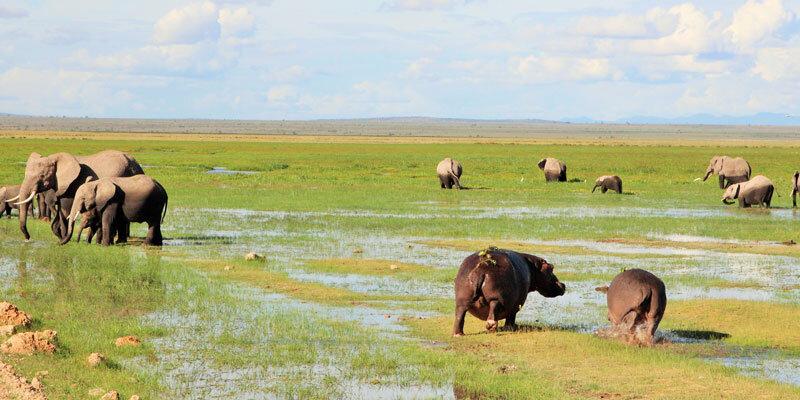 Kenia_Amboseli Nationalpark-Elefanten_Flußpferde.Bild A.Friedlaender