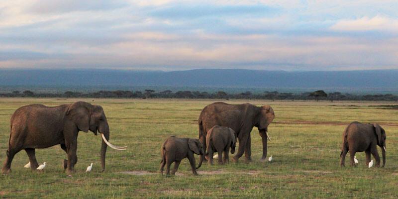 Kenia Elefanten-Herde vor dem Kilimandscharo im Amboseli Nationalpark