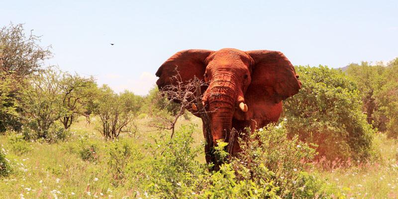 Kenia_Severin_Safari Camp_Elefant_WildnisBild A.Friedlaender