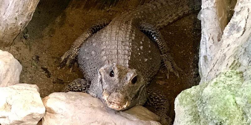 Krokodil-Happs-Reptilienzoo