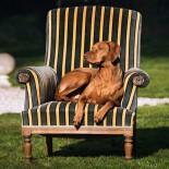 la feuillaie: hauseigener Hund Ginger; Bild: la feuillaie