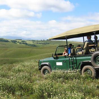 Gondwana Landrover-Fynbos-game-drive