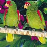 Bunte Vögel: Papageien