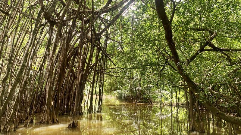 Mangroven-Dschungel, Elephant Hills Foto: © Andrea Fischer
