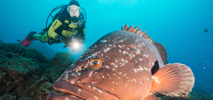 Manta Diving - Tauchkurs