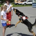 Hunderfuehrerschein: Übung zum Kennenlernen ...