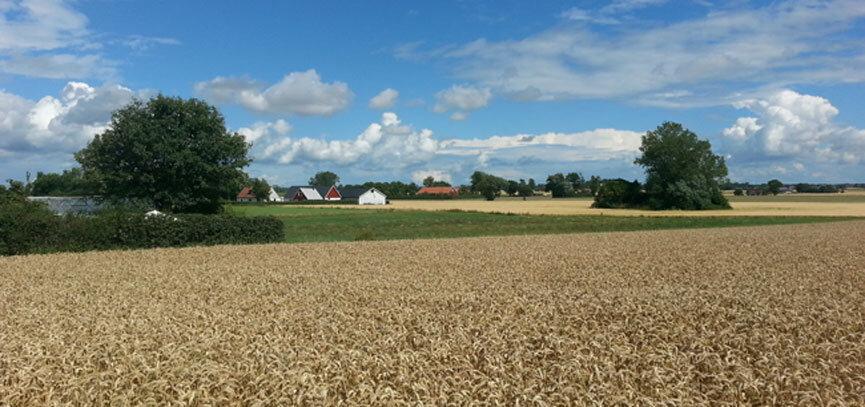 Landschaft beim Tomatenhaus in Schweden