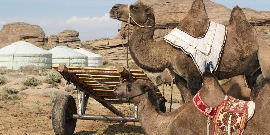 Unforgettable_Journeys_zwei_Kamele Mongolei; Bild@Unforgettable Journeys